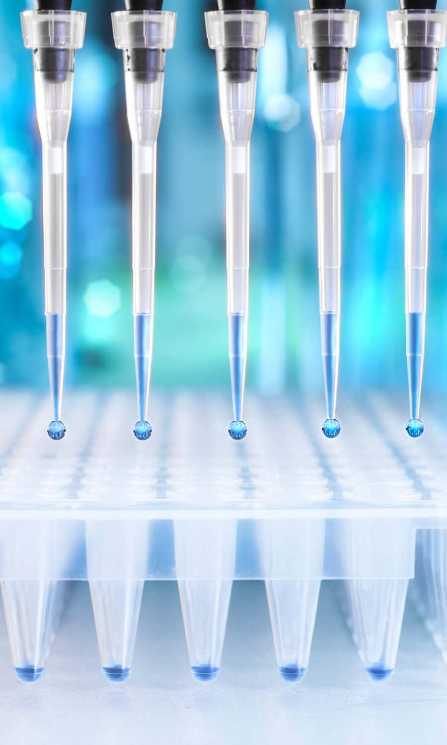 Multichannel,Pipette,Tips,Filled,In,With,Reaction,Mixture,To,Amplify